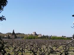 vigne-donjon-hiver